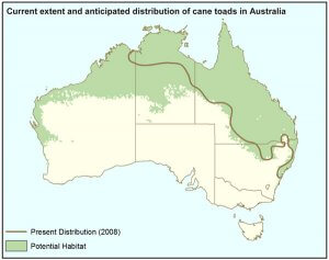 Distribution of Cane Toad