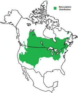 Geographical Distribution of Green frog
