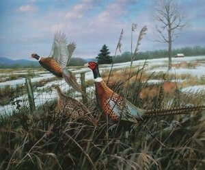 Reproduction of Ringneck pheasant