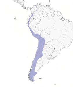 The geographical range of Andean Condor