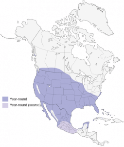 The geographical range of Eurasian collared dove