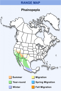 The geographical range of Phainopepla