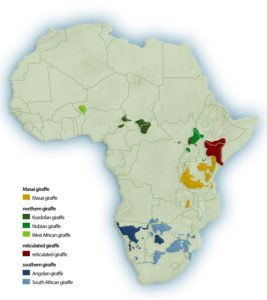 Distribution of Masai Giraffe