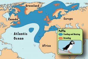 Geographical range of Atlantic puffin