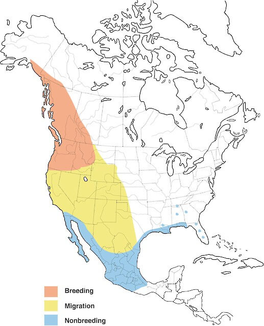 Geographical range of Rufous hummingbird