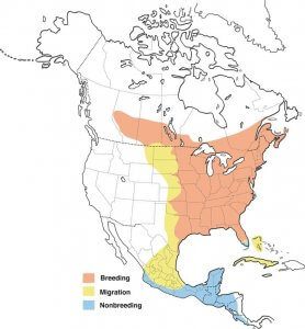 The geographical range of Black-Chinned Hummingbird