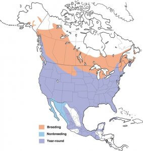 The geographical range of Red-Winged Blackbird