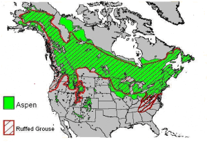 The geographical range of Ruffed Grouse